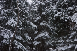pigeon river winter camping 23