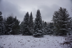Pigeon River Country State Forest, MI - Jan 2015