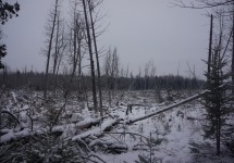 pigeon river winter camping 4