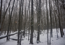 pigeon river winter camping 5