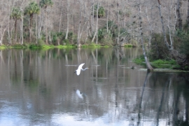Silver River State Park 1-15-08_22