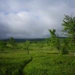 dolly sods open meadow